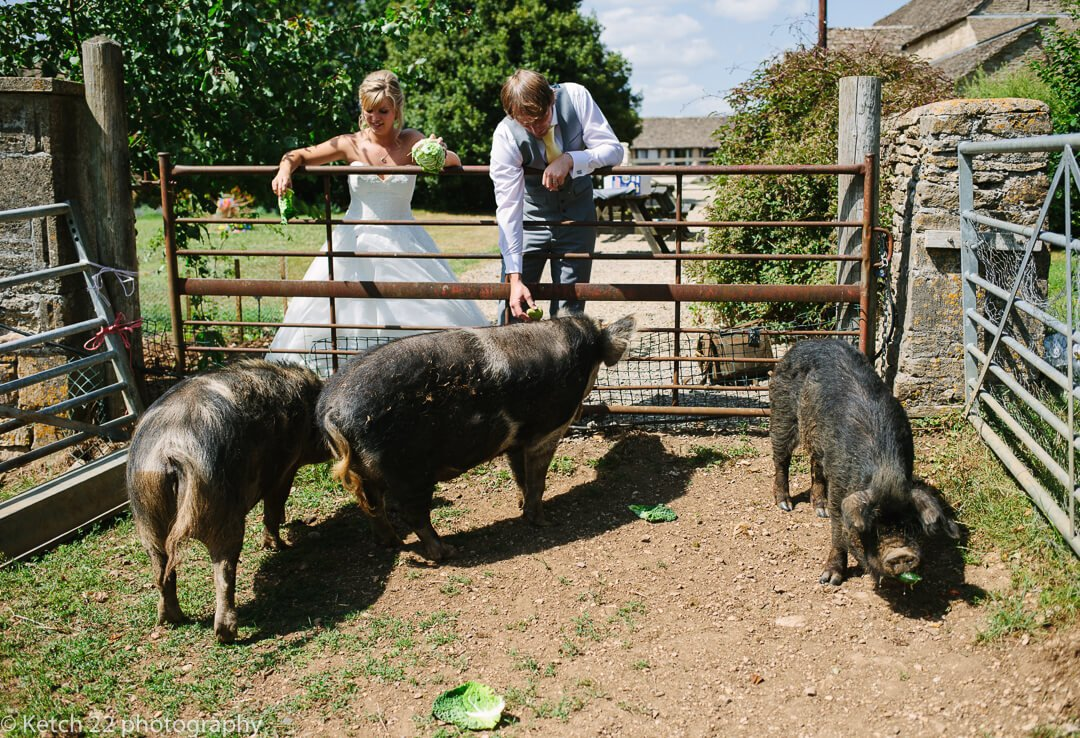 Bride and groom feeding pigs at The great Tythe Barn wedding