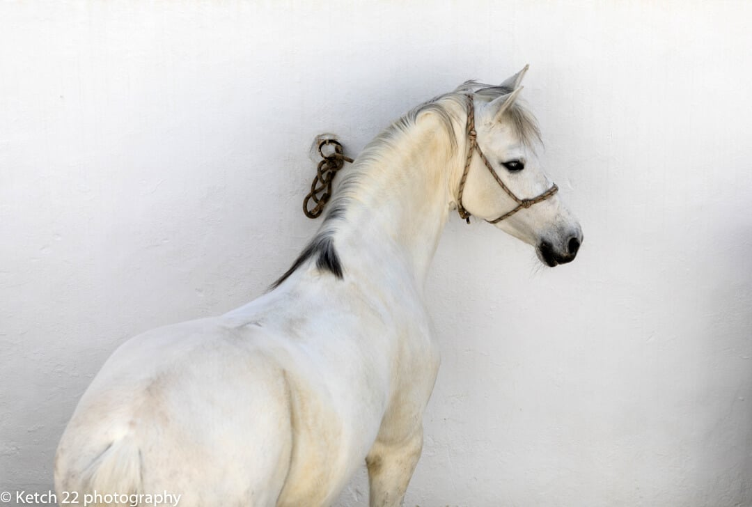 Spanish horse for wedding photography and photo tours blog