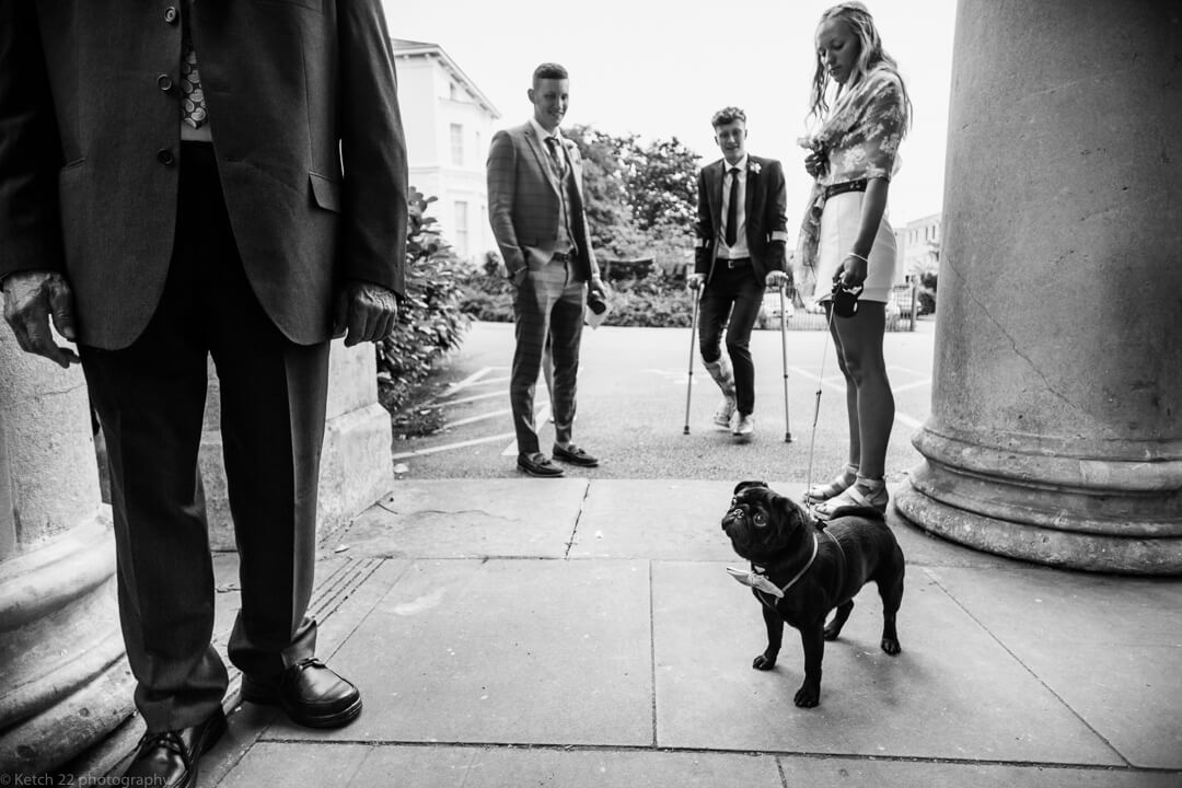 Black dog with bow tie at wedding