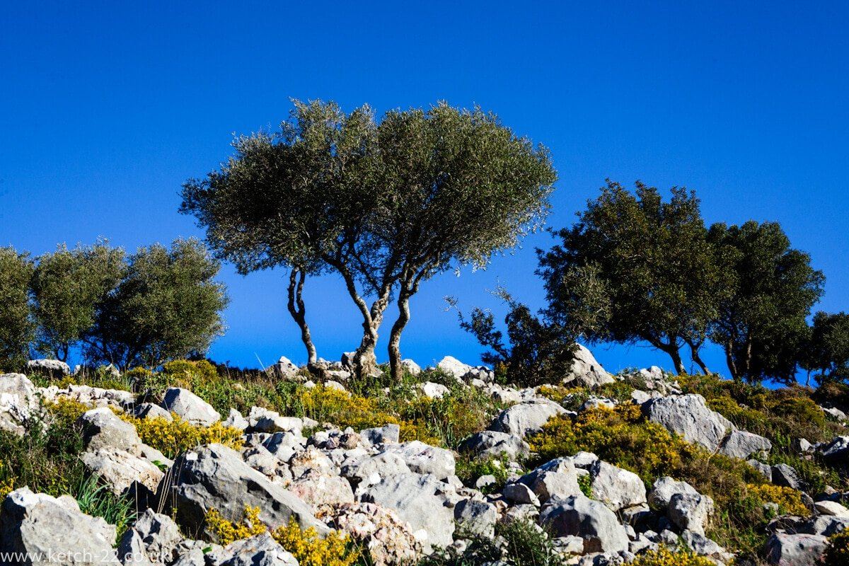 Green bushes,rocks,bright yellow flowers and blue sky near Benocaz